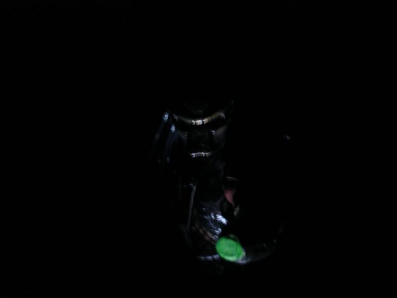 N°2 - Collection d'Endoskeleton38 Dsc05821