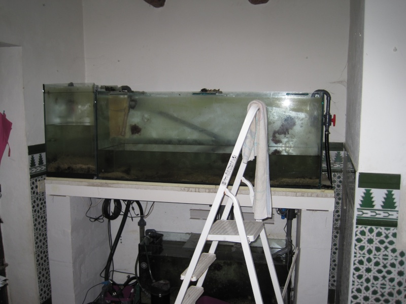 Projet 1000 litres en Jaubert déporté - Page 3 Img_1012