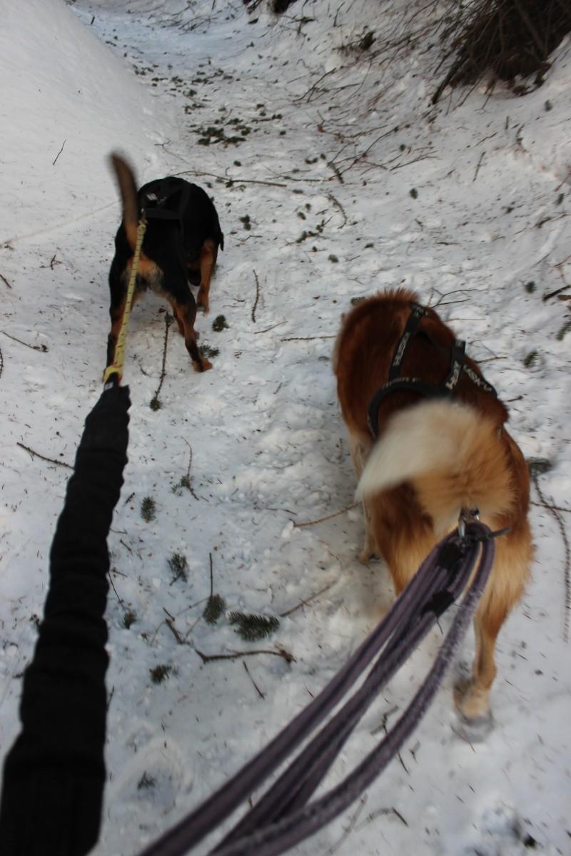 Nous on aime pas la neige ... Img_2210