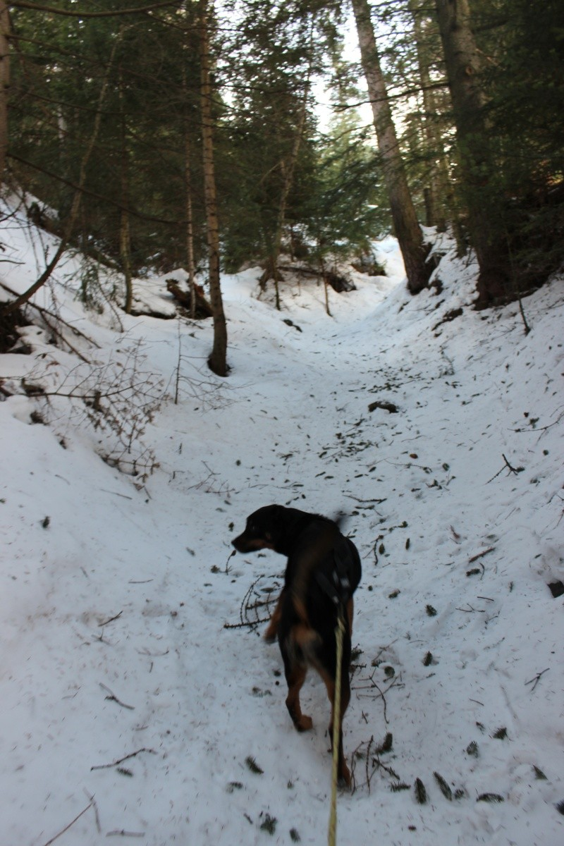 Nous on aime pas la neige ... Img_2211