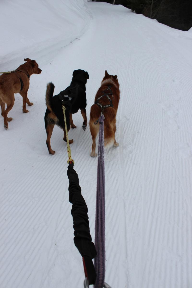 Nous on aime pas la neige ... Img_2212