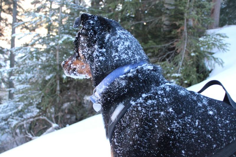 Nous on aime pas la neige ... Img_2410