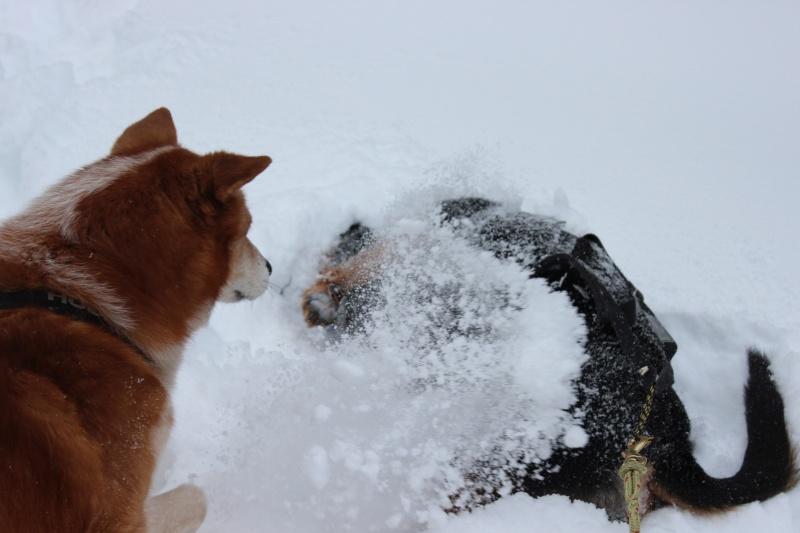 Nous on aime pas la neige ... Img_2511