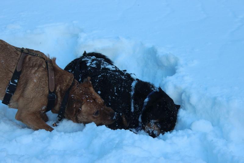 Nous on aime pas la neige ... Img_2710