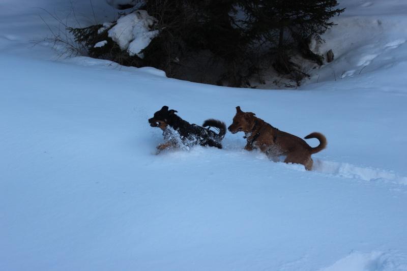 Nous on aime pas la neige ... Img_2711