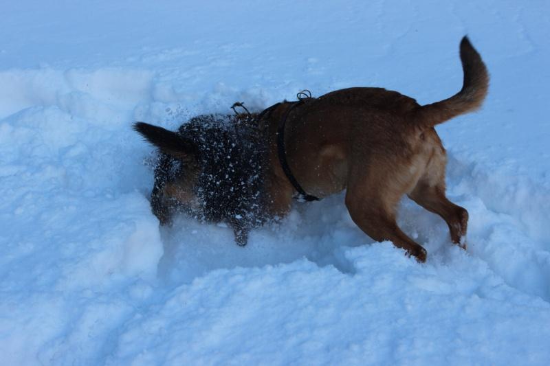 Nous on aime pas la neige ... Img_2712