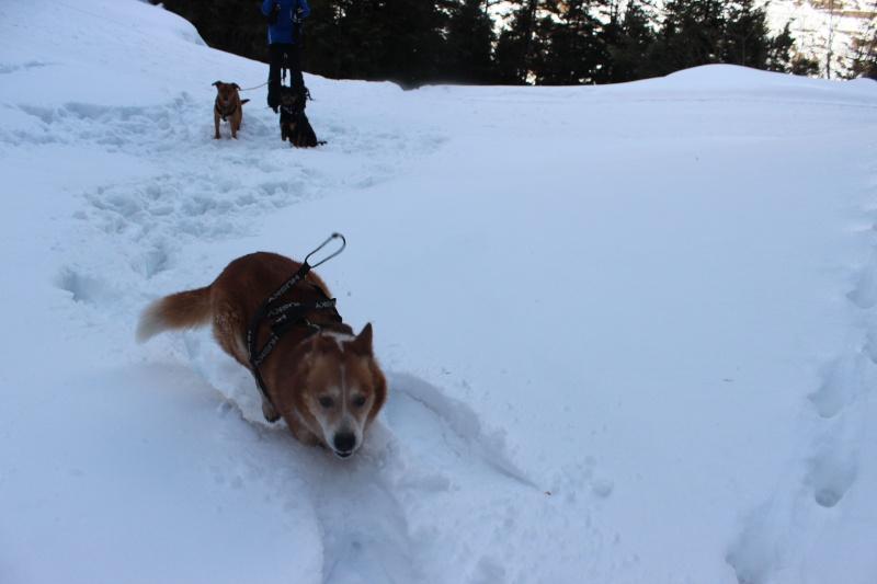 Nous on aime pas la neige ... Img_2810