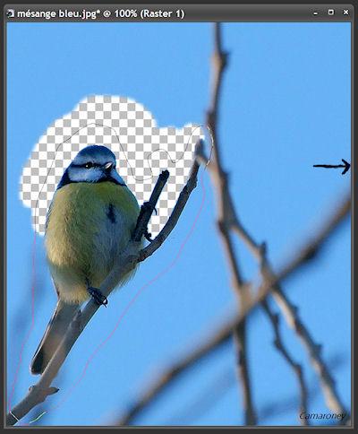 Réaliser une photo hors-cadre avec Paint shop pro Tuto_210