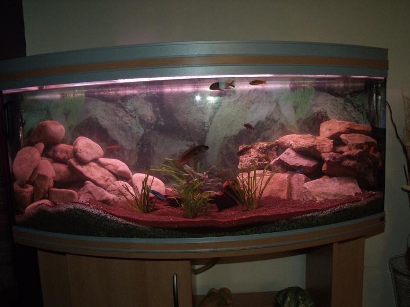 nouvel aqua rena 340 L panoramique Dscf2512
