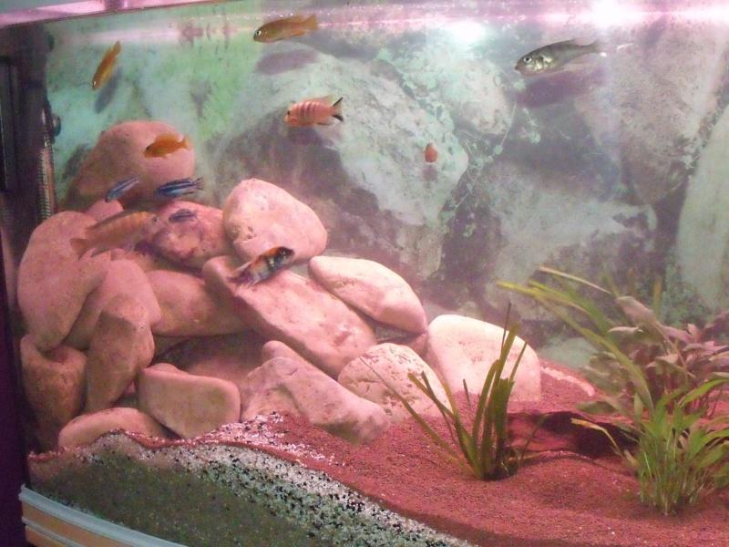 nouvel aqua rena 340 L panoramique Dscf2513