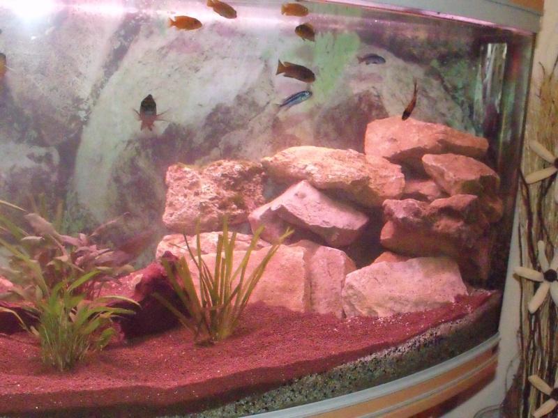 nouvel aqua rena 340 L panoramique Dscf2515