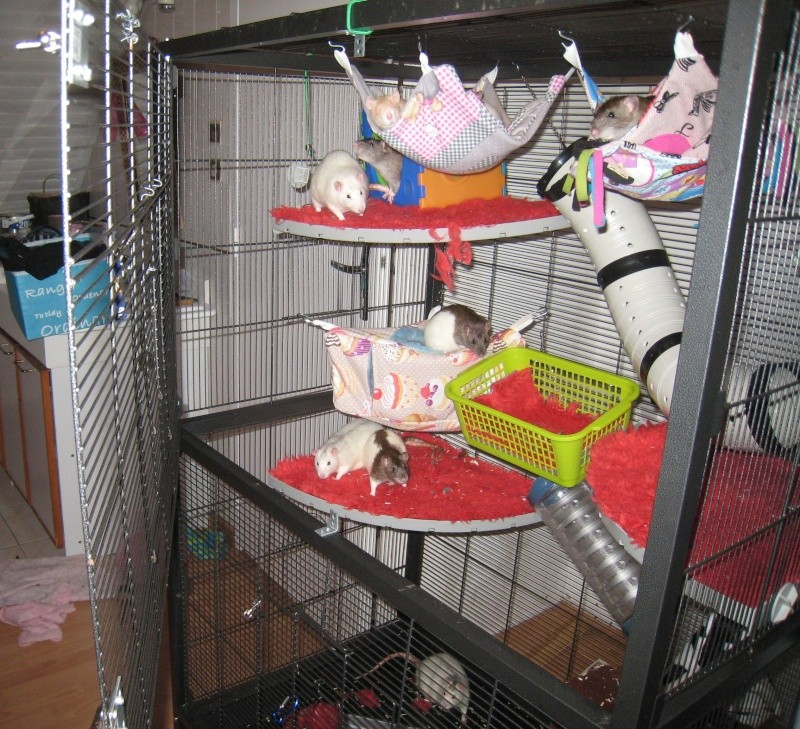 cage/volière bricolée  Cage110