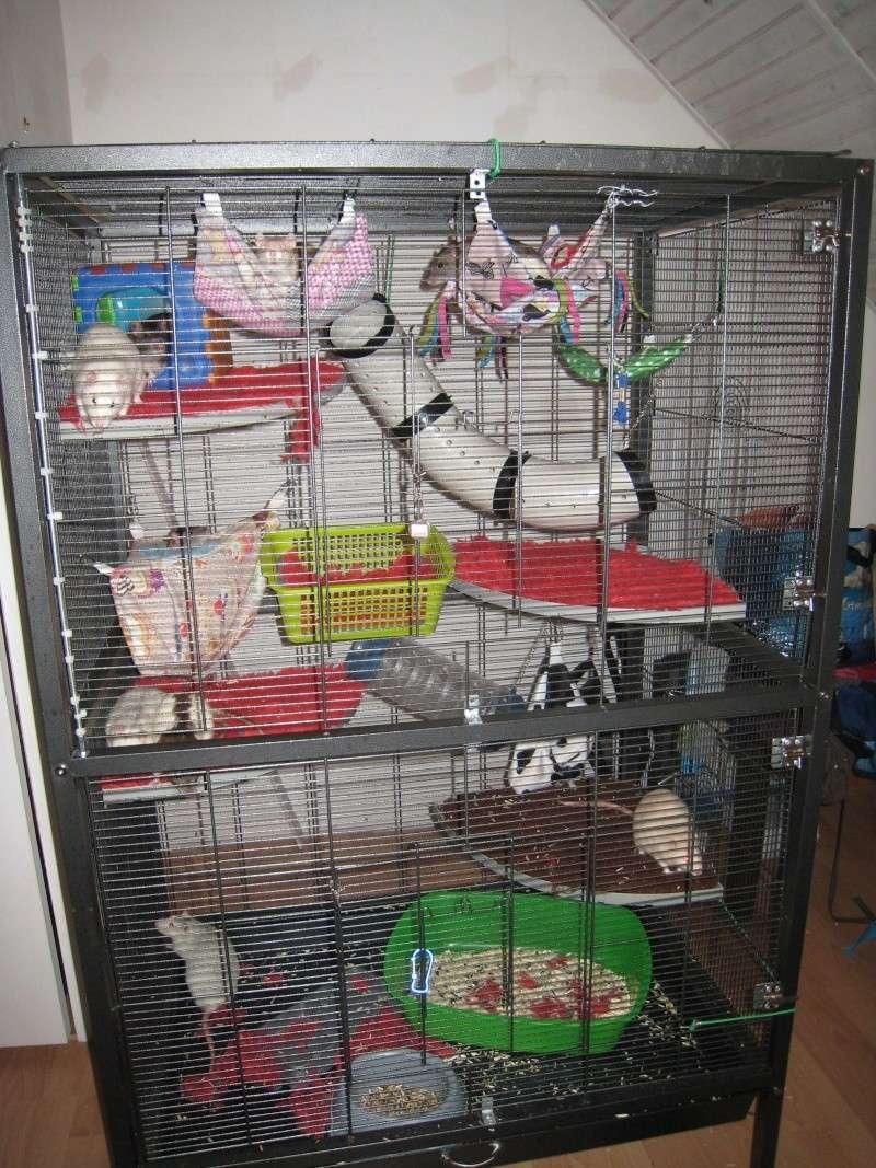 cage/volière bricolée  Img_6714