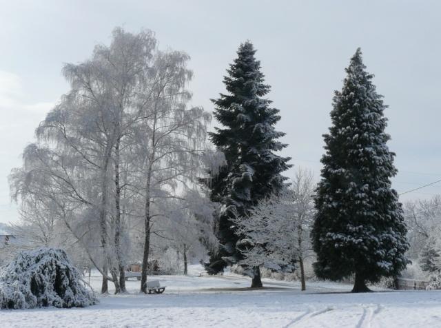 vos ambiances hivernales !!! c'est parti !! - Page 2 Arbres10