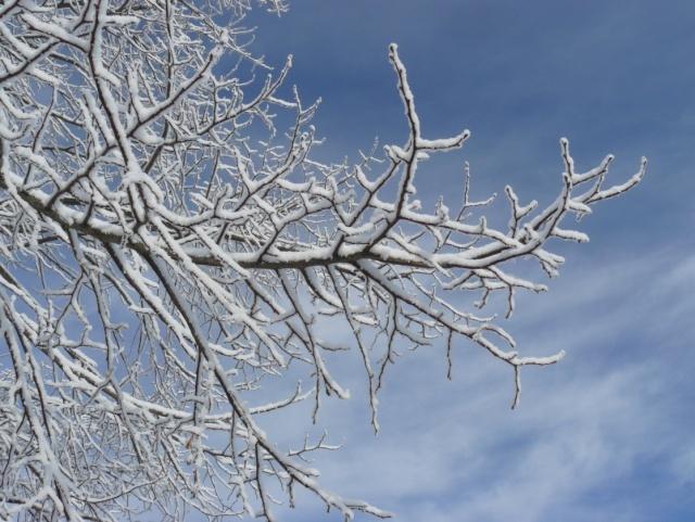 un arbre en hiver - participations Branch10