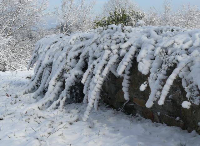 vos ambiances hivernales !!! c'est parti !! - Page 2 Lierre10