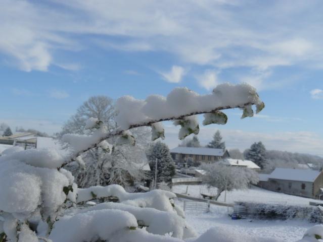 vos ambiances hivernales !!! c'est parti !! - Page 2 Lierre11