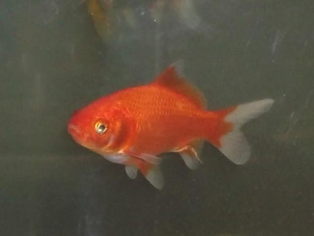 deux poissons rouges dans un 40L - Page 2 Dscf1612