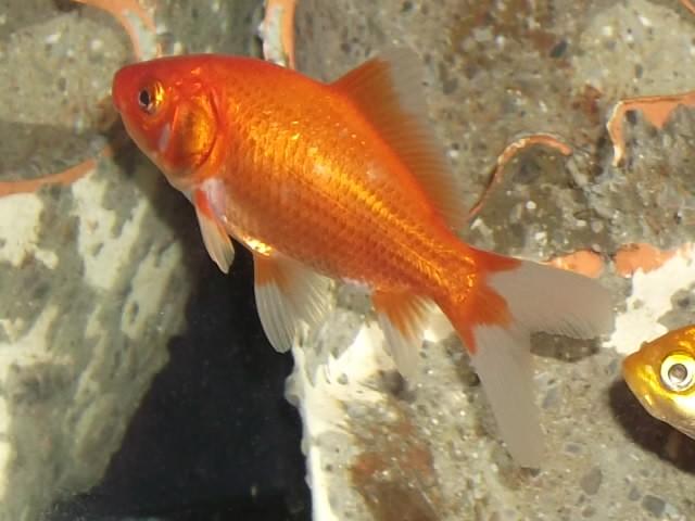 deux poissons rouges dans un 40L - Page 2 Dscf1718