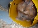 Les photos délires de vos animaux... Dscn2410