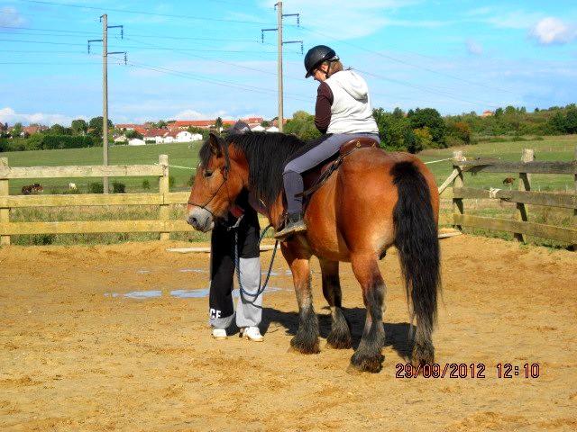 Besoin d'aide... :$ cheval qui ne travaille plus durant le debourrage. 40413111