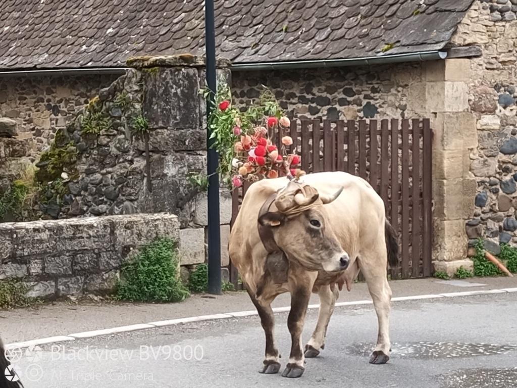 Voyage en Aveyron Img_2205