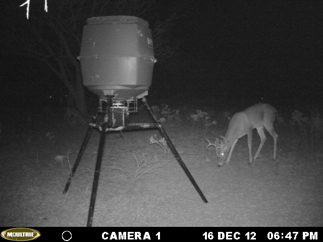 west Texas (Young county) feeder shots Mikes_12