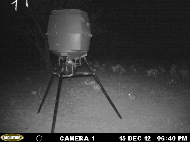 west Texas (Young county) feeder shots Mikes_13