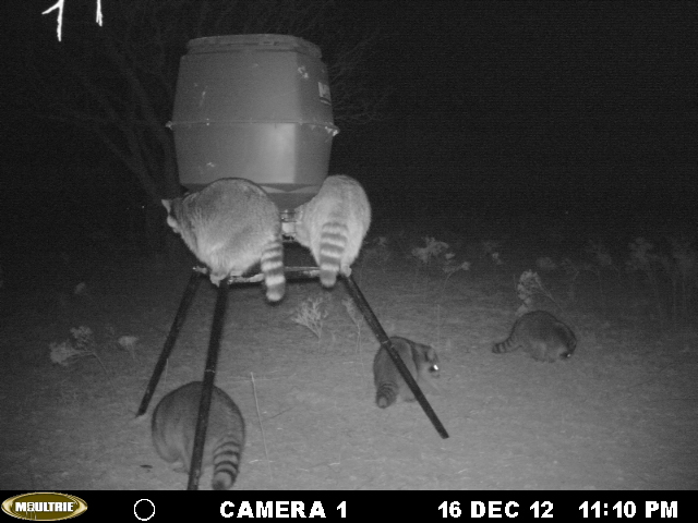 west Texas (Young county) feeder shots Mikes_15