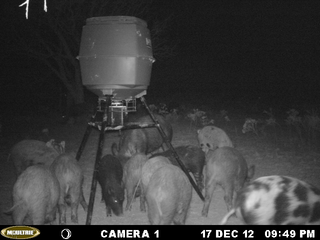 west Texas (Young county) feeder shots Mikes_16