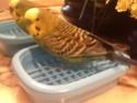 Léo dans son nouveau bain. 48317610