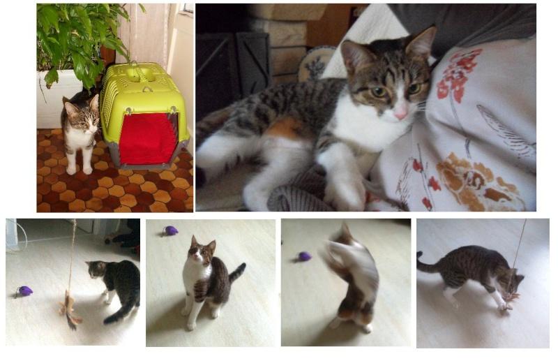 Heila très beau chaton femelle - BEUVRAGES Heilal10