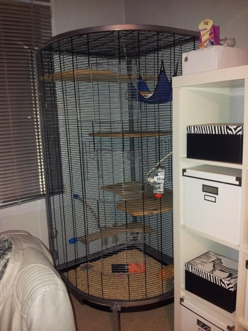 Nouvelle cage pour mes rastakouettes 20130210