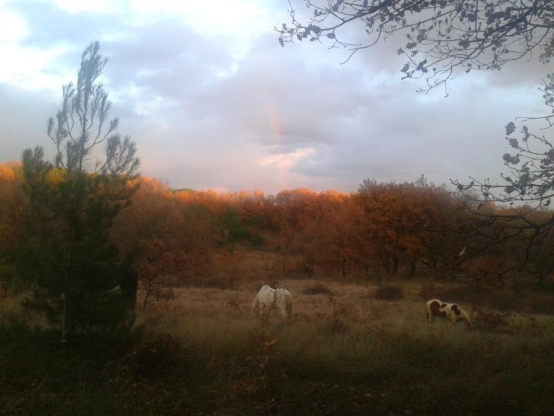 mes chevaux 2012-110