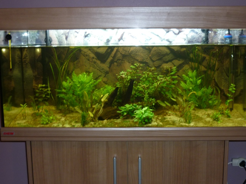 nouvelle version de mon aqua 180 Litres P1010311