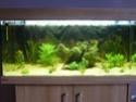 nouvelle version de mon aqua 180 Litres P1010313