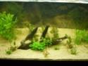 nouvelle version de mon aqua 180 Litres P1010315
