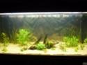 nouvelle version de mon aqua 180 Litres P1010317