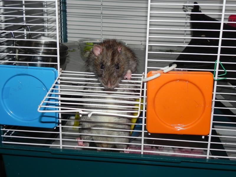La douce retraite de Papy rat  Dscn8010