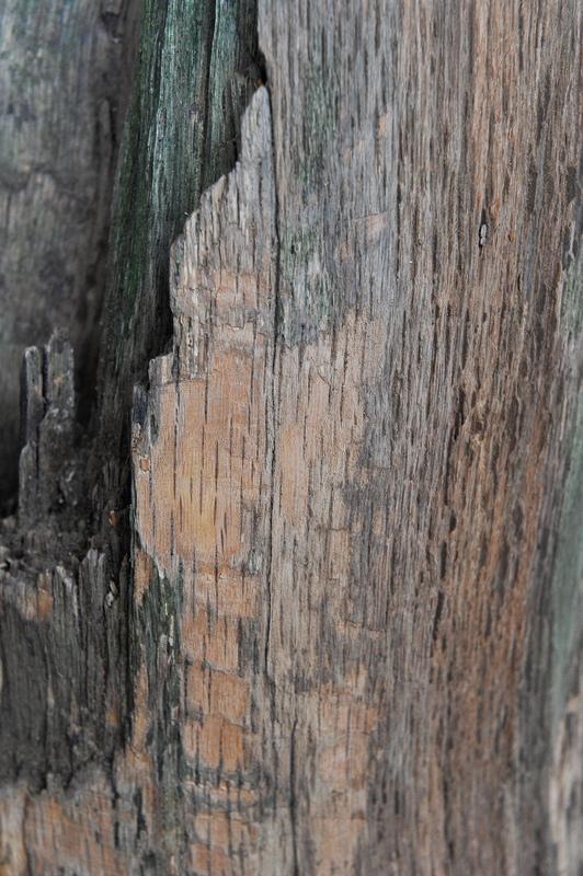 Traitement tronc d'arbre 20130114