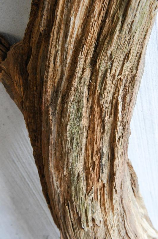 Traitement tronc d'arbre 20130115