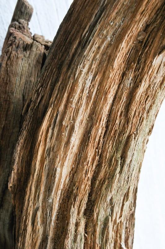 Traitement tronc d'arbre 20130120