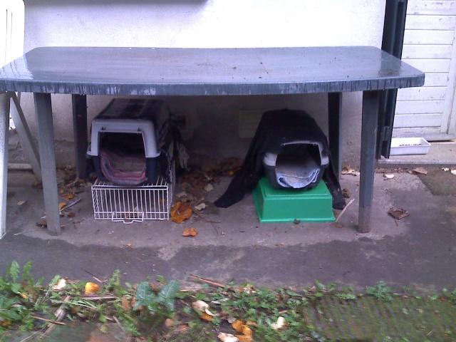 Créer un abri contre l'hiver pour les chats errants Moto_212
