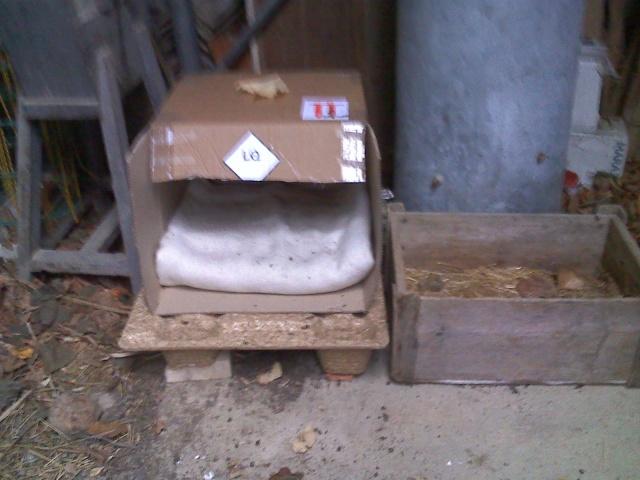Créer un abri contre l'hiver pour les chats errants Moto_213