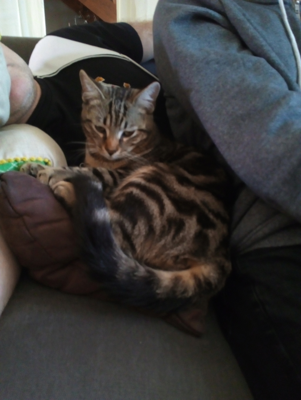 Orégon, chat européen tigré, née en 04/2018. Img_2067