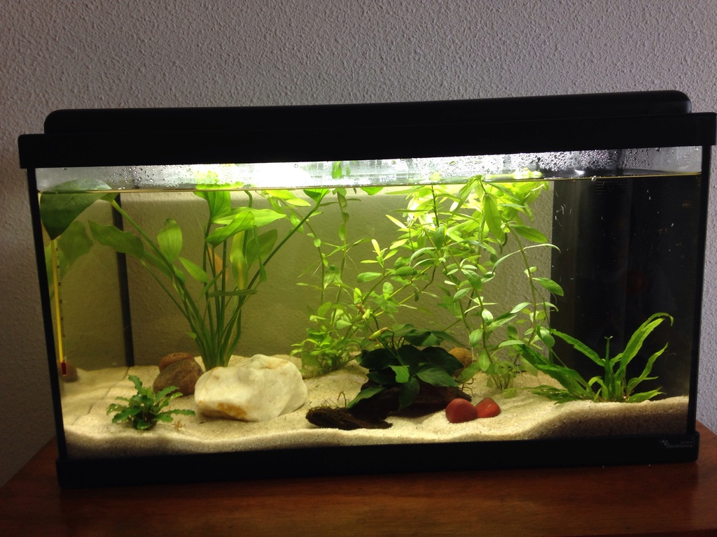 Quels poissons choisir pour débuter Aquari10