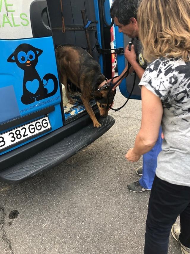 Arrivée par camion 27 juillet 2019 Roumanie  - Page 3 67238610