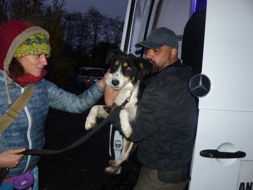 Arrivée du 10 novembre 2018 par camion (Roumanie) - Page 6 P1130417