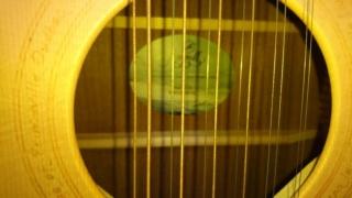 12 cordes Seagull 360 euros 12110