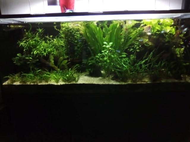 Mes aquariums - Page 18 42526211